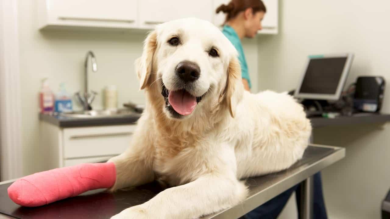 Canada Pet Insurance