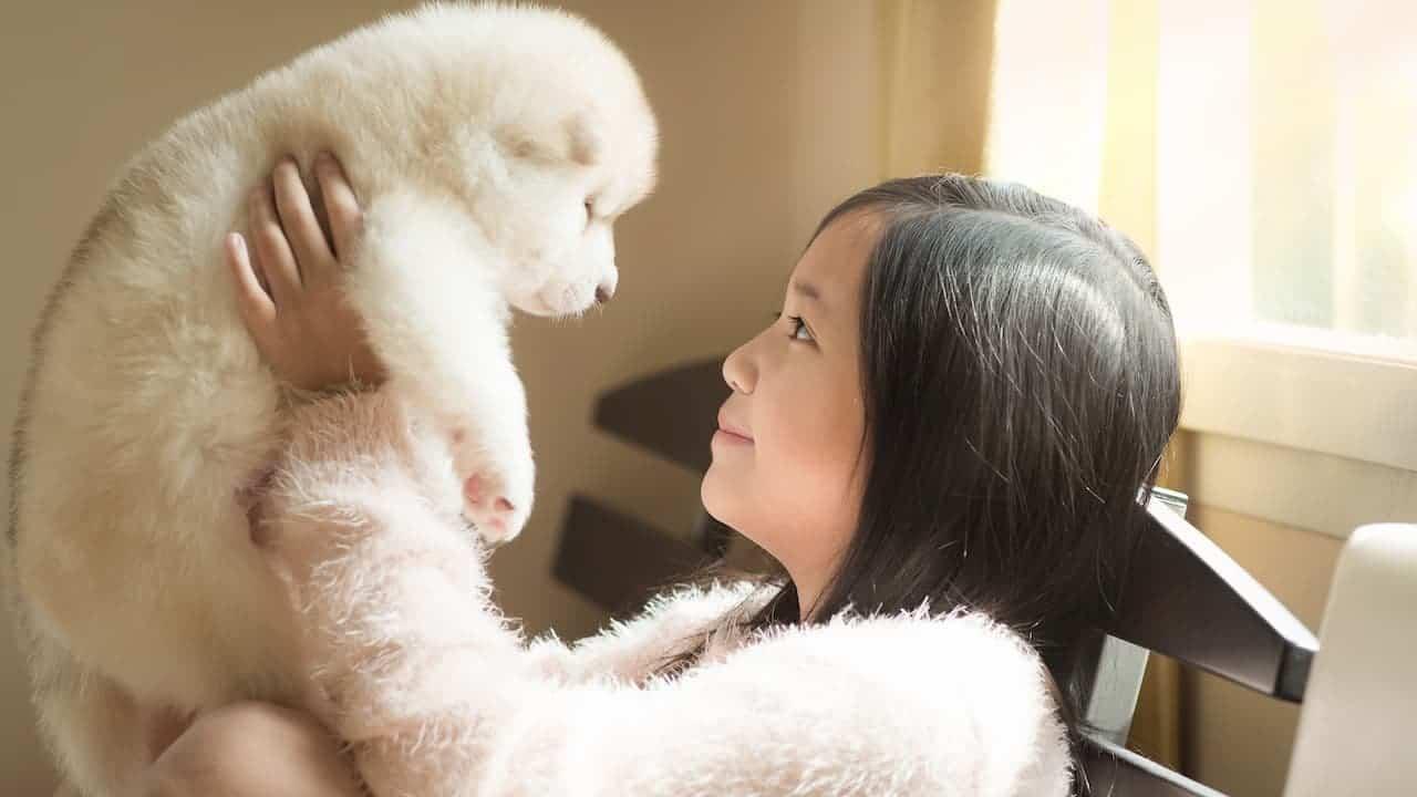 Insurance for Pets Canada, Alberta